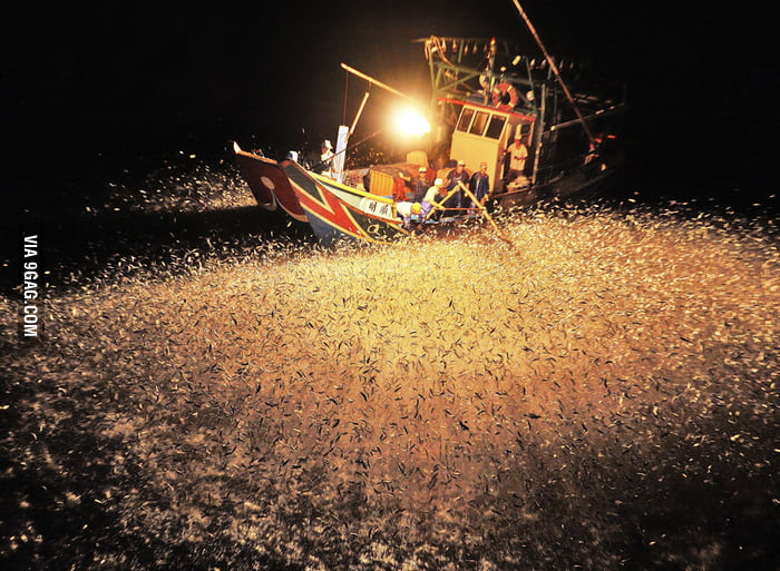 Chinese fishermen using fire to attract fish at night.