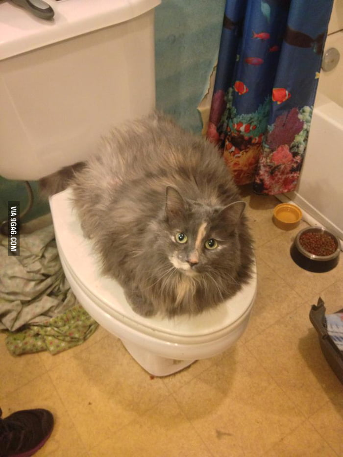 She doesn't let me use the toilet.