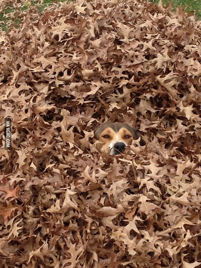 He likes leaves a lot.