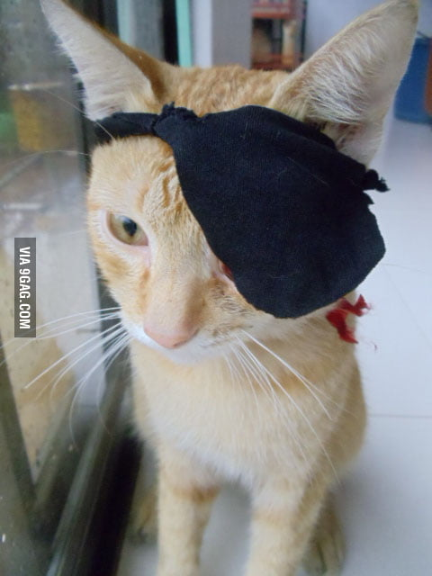 My cat lost an eye so I made him an eye patch!