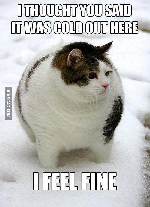 My fat friends always say this when I feel cold.