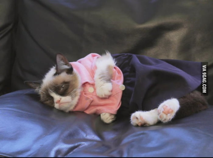 Grumpy Cat hates getting dressed up.