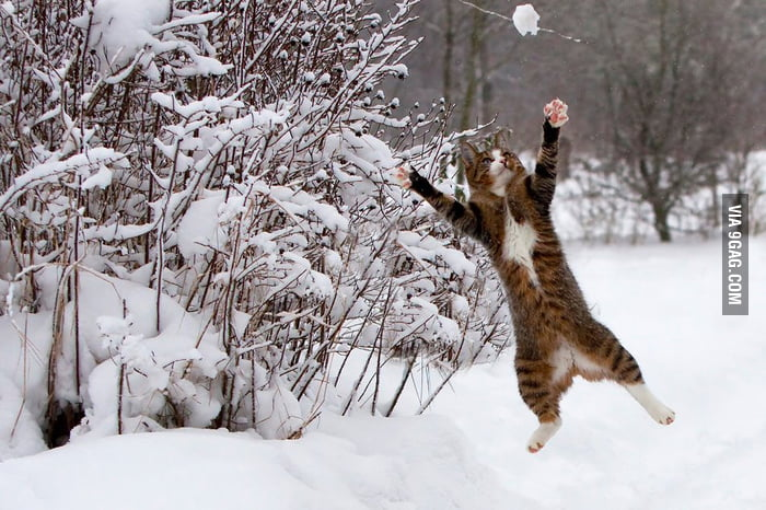 Gotta catch the snow!