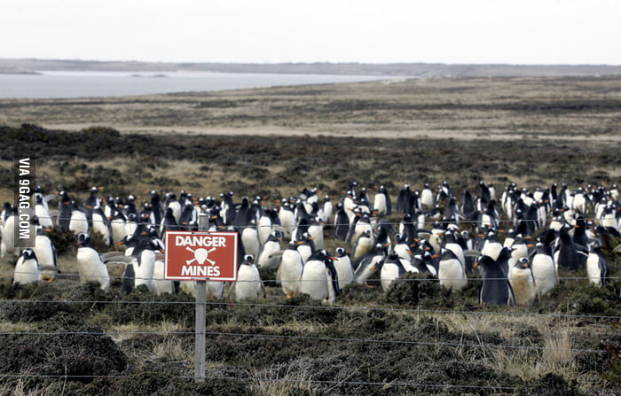 Fearless Penguins!