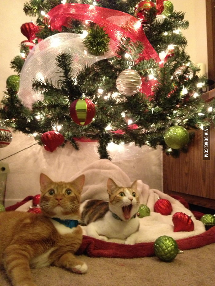 I think they are happy to have Christmas!