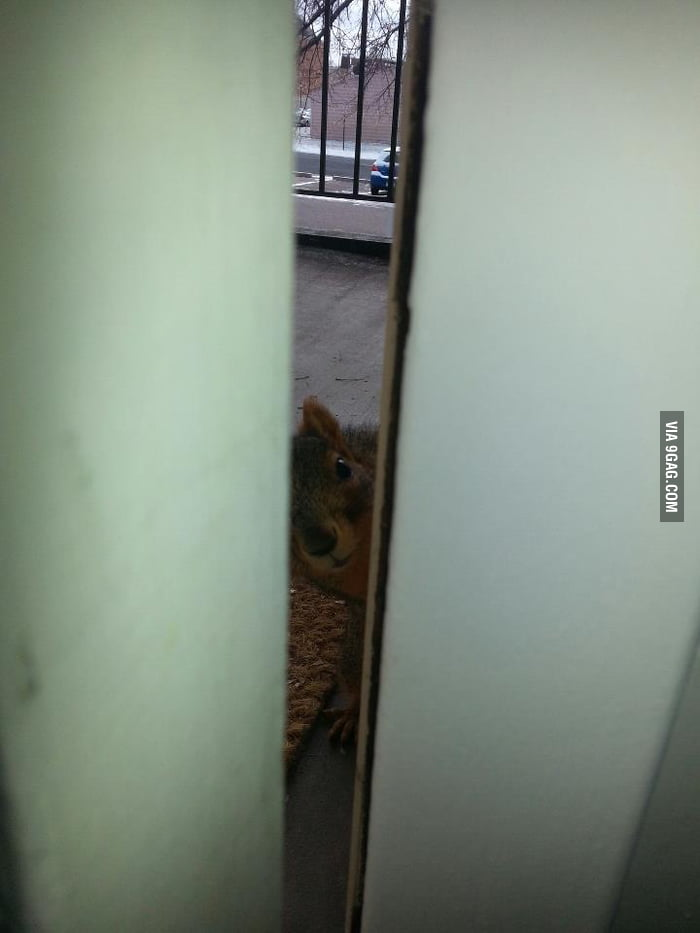 There's a little stranger at my front door.