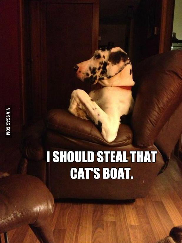 Dog's reply to the cat meme.