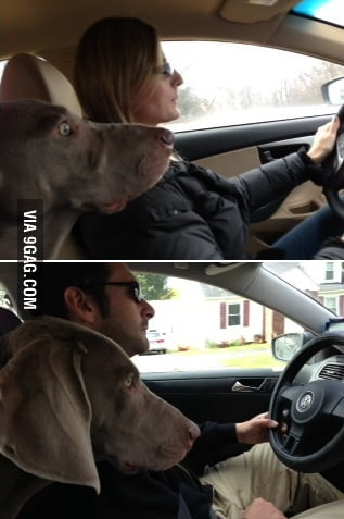 Who is a better driver? Let's let the dog decide.
