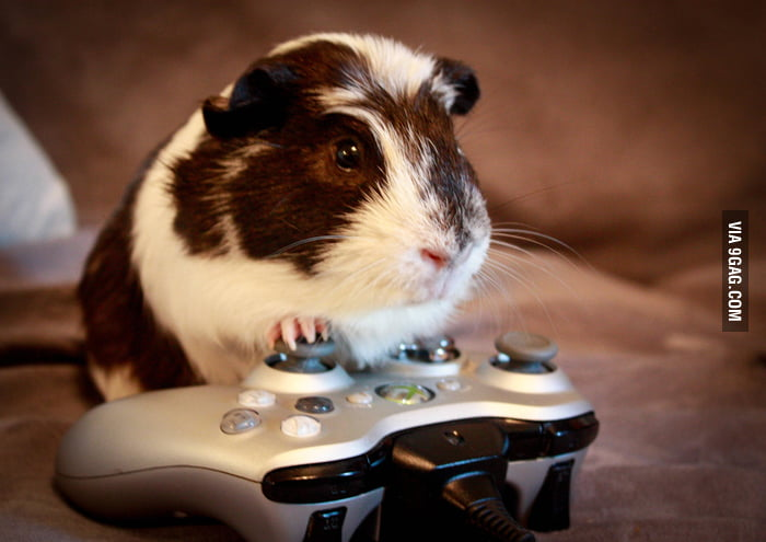 My gaming partner.