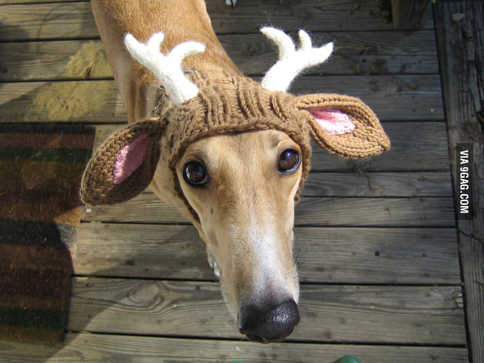 He really looks like a reindeer with the hat.