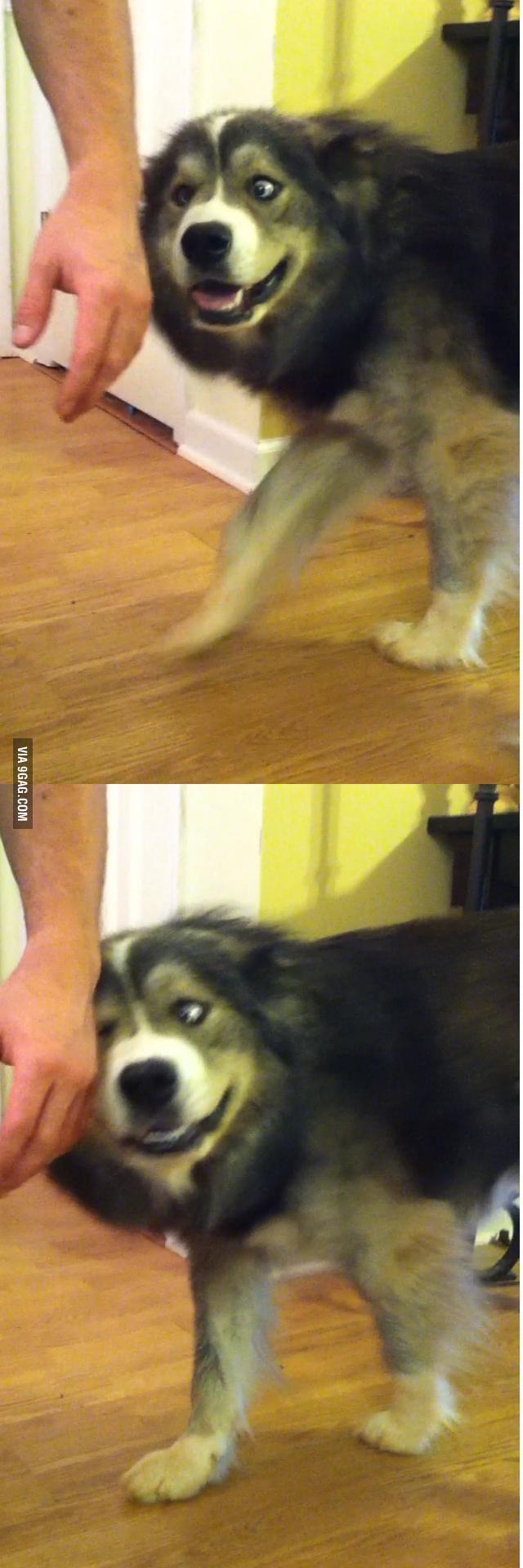 Hand, pet me!