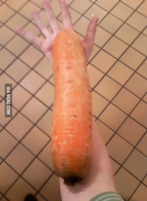 This carrot is pretty big.