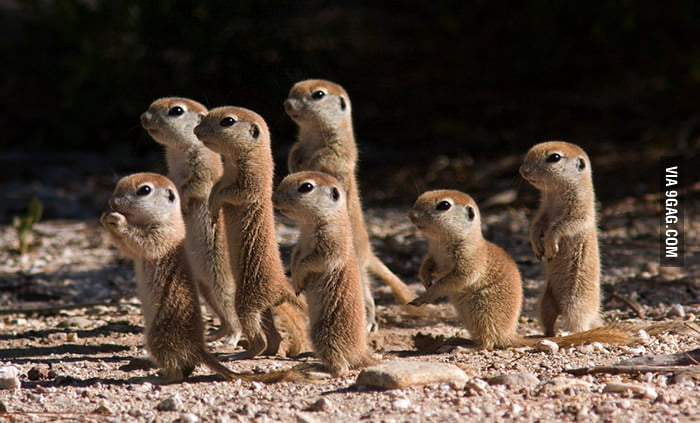 Baby meerkats are so cute!