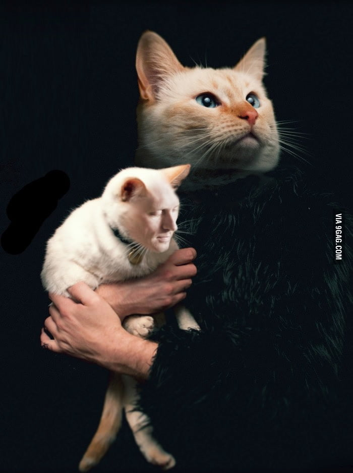 Cat face swap