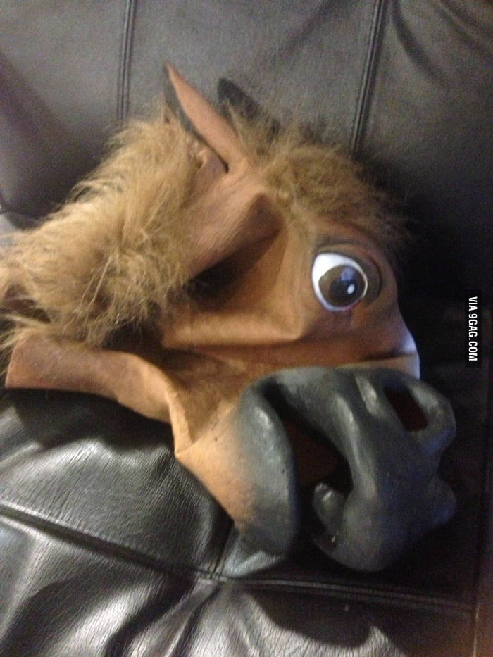 Go home horsemask, you're drunk !