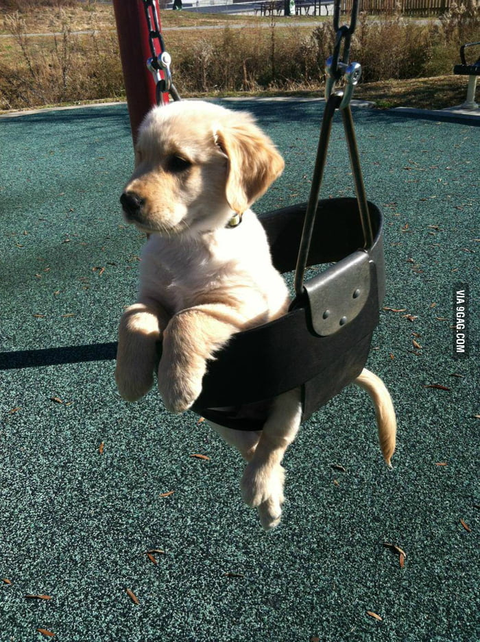 I'm not Snoop Dogg, I'm Swing Dog.