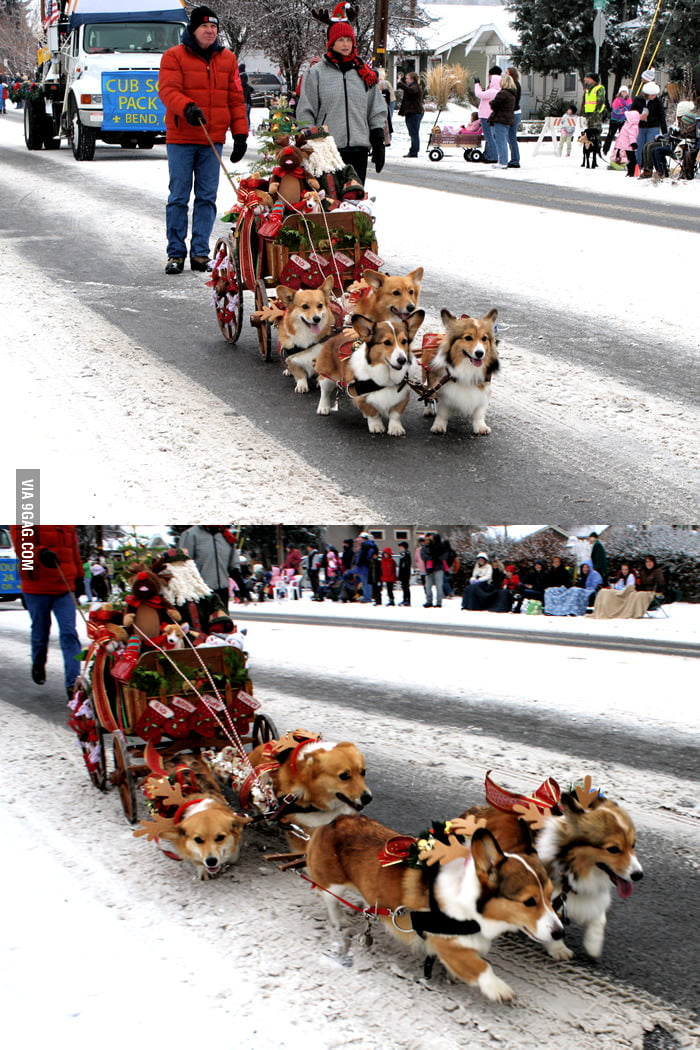 Corgi Express - the cutest sleigh ever!
