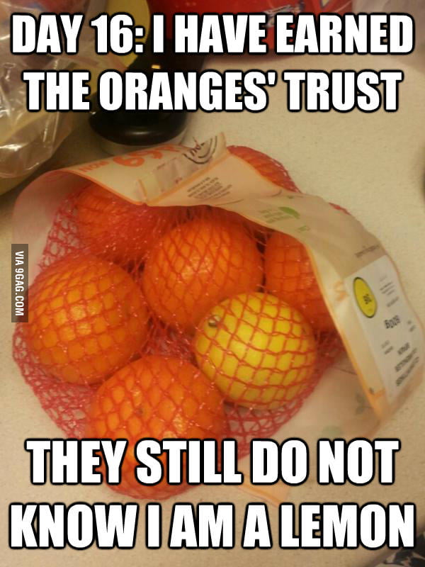Day 16: I have earned the oranges' trust.
