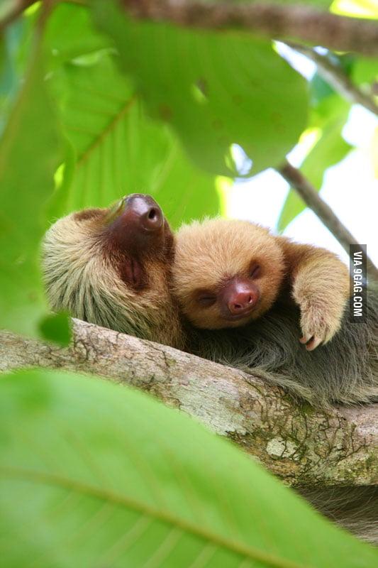 Cuddling sloths.