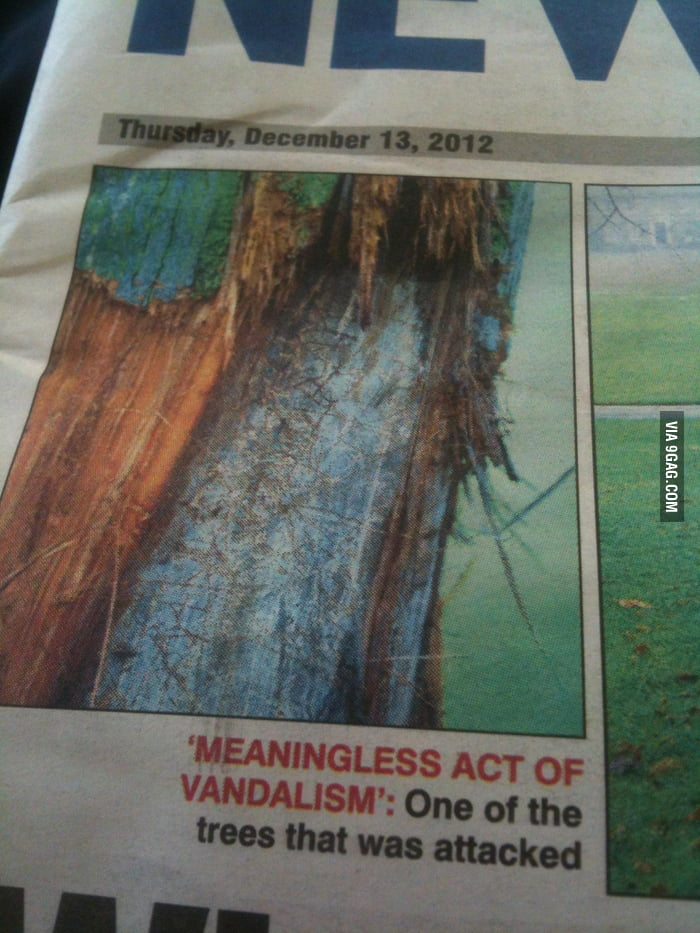 So far as I can tell, this newspaper is quoting a tree.