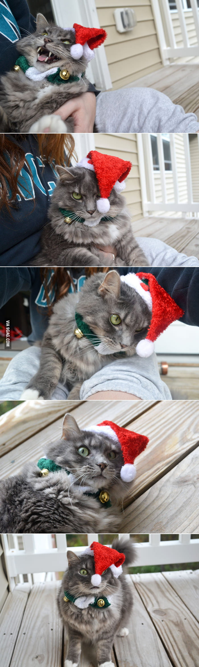Getting a good Christmas cat photo is not easy.