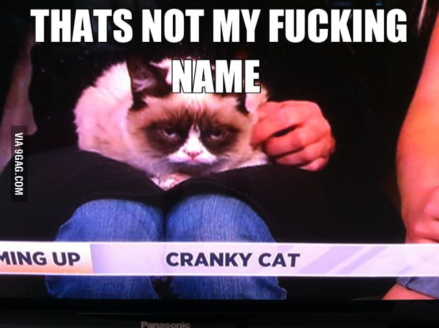 Saw Grumpy Cat on the news.