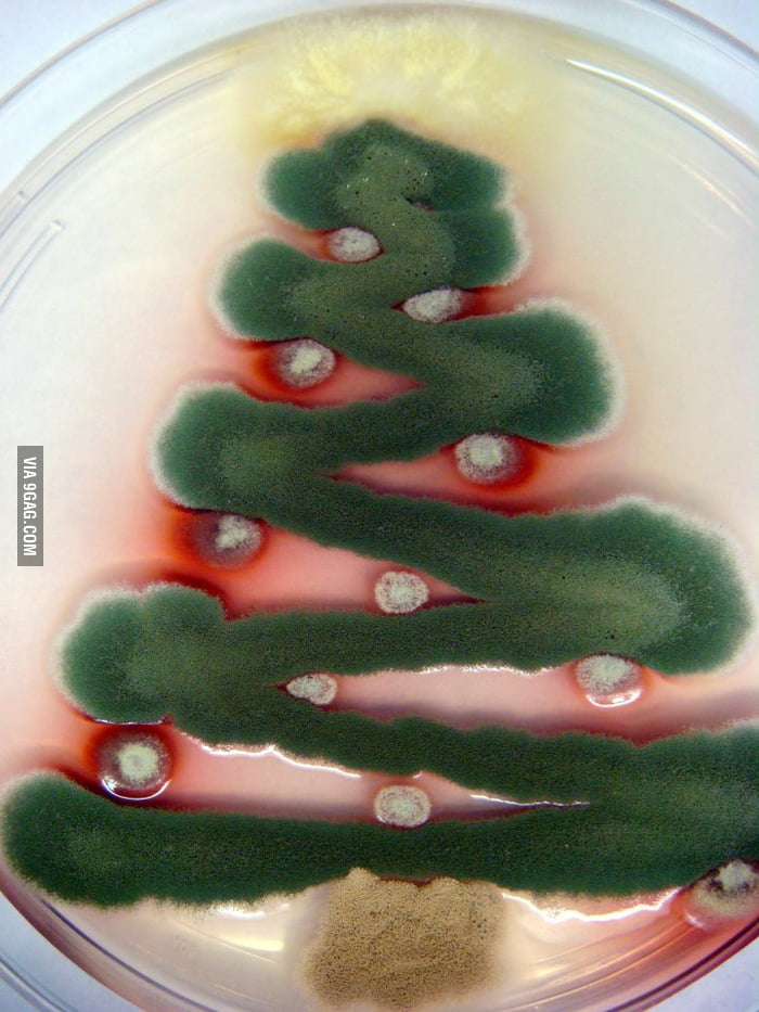 A Christmas tree made of mould