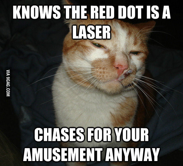 Good Guy Cat.