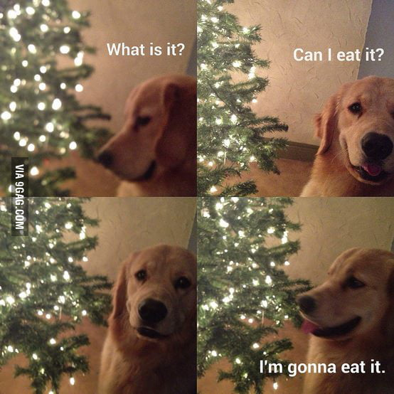 My dog's thought process when encountering new things