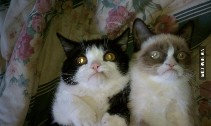 Grumpy Cat got a brother.