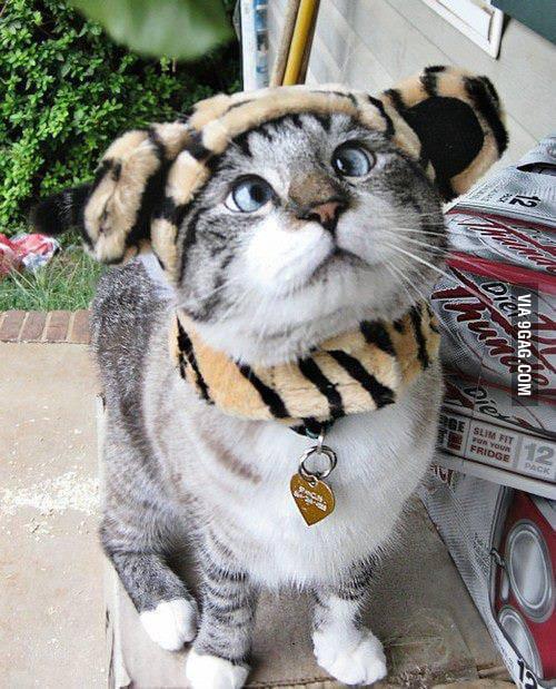 Alien cat :))