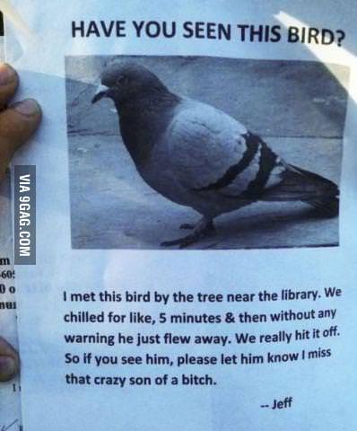 Missing Bird...