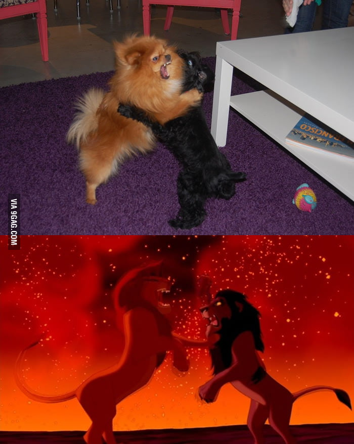 The final scene in The Lion King