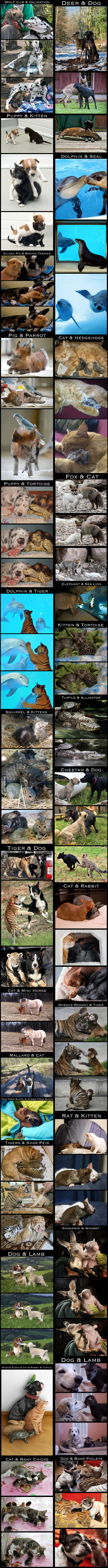 These are some true friendships