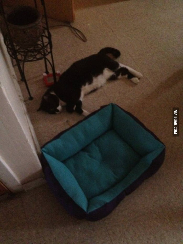 Bought my cat a bed.