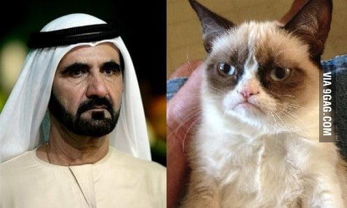 The Prime Minister of U.A.E looks like grumpy cat