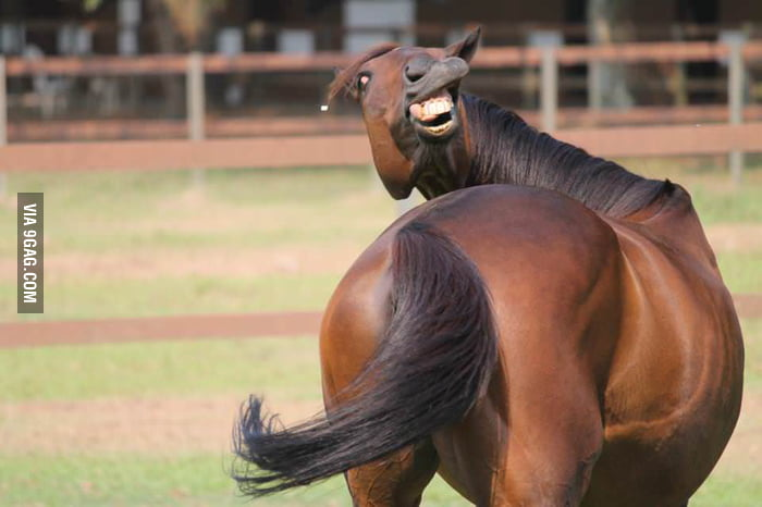 Go home, horse. You're too drunk.