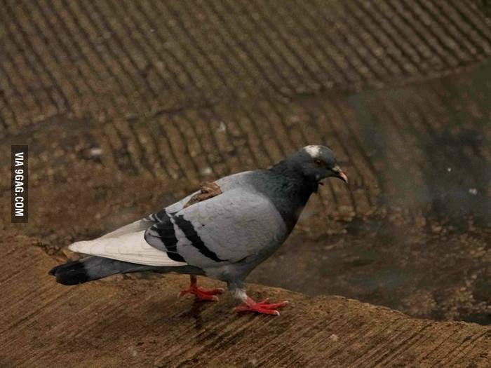 Karma strikes on this bird.
