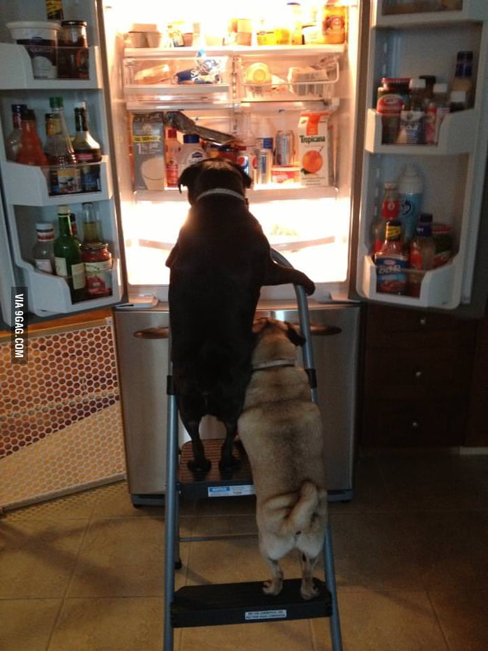 Little pugs have found the promised land!