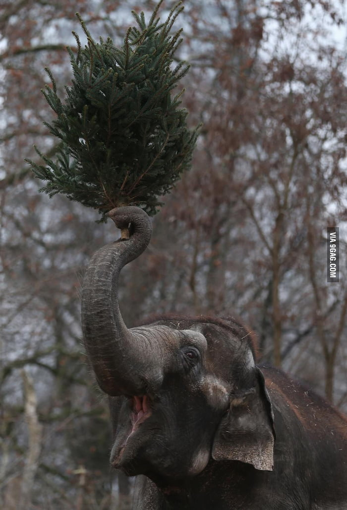 I am an elephant. This is my tree!