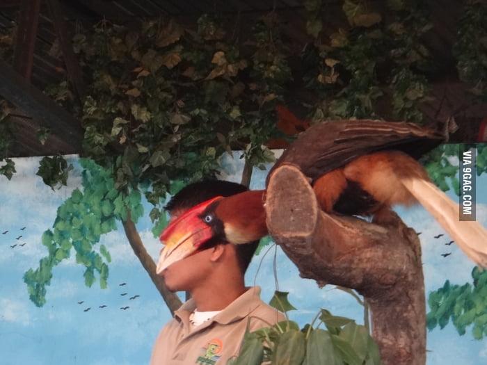 Photobomb bird makes a good mask