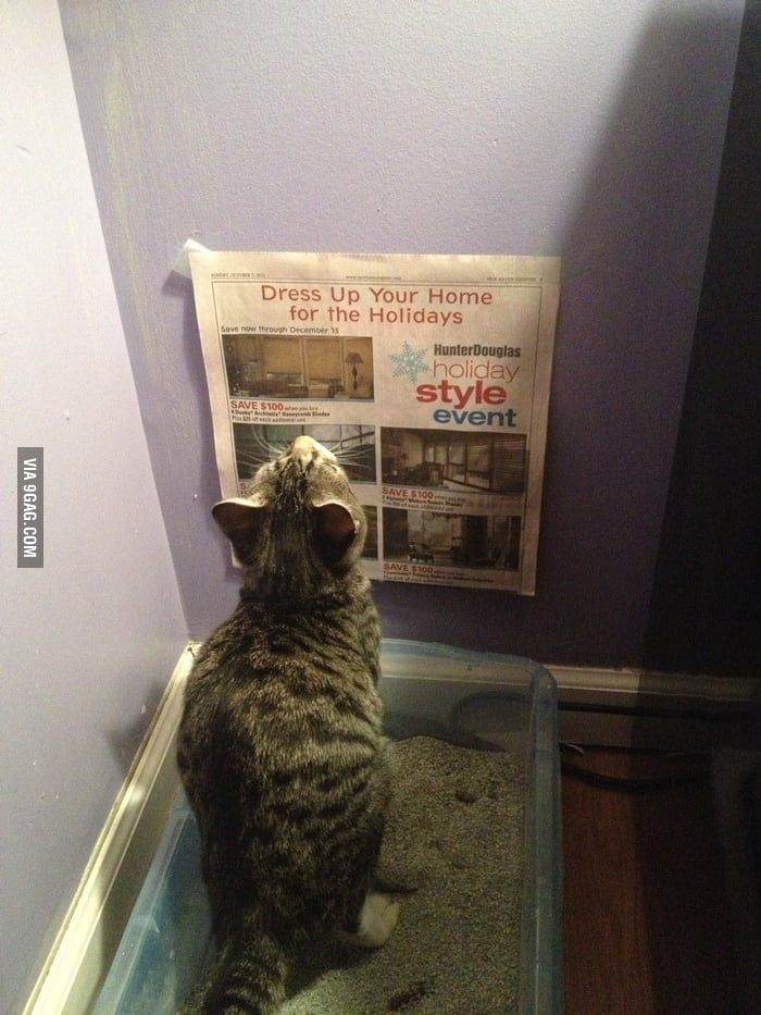 Gave my cat something to read while she does her business.