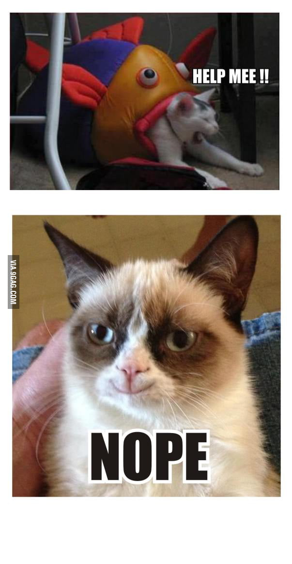 Grumpy Cat is Entertained