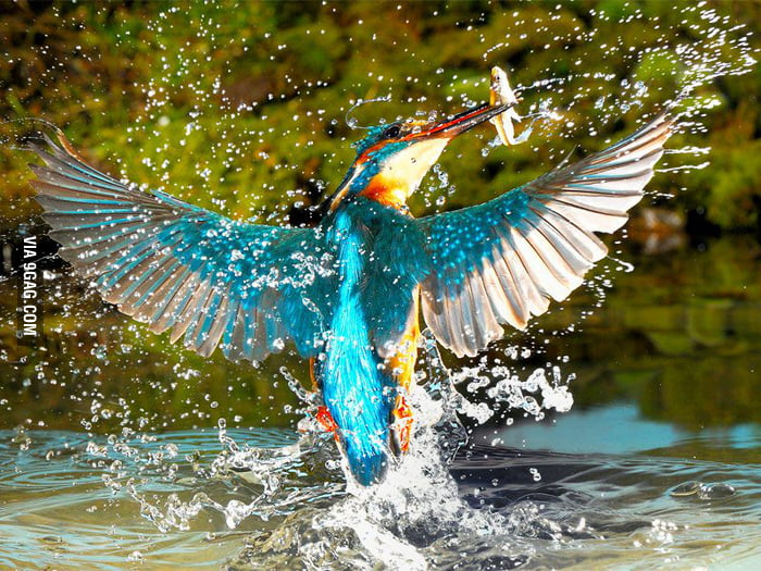 The Fabulous Kingfisher!