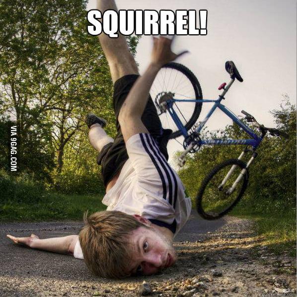 Squirrel spotter