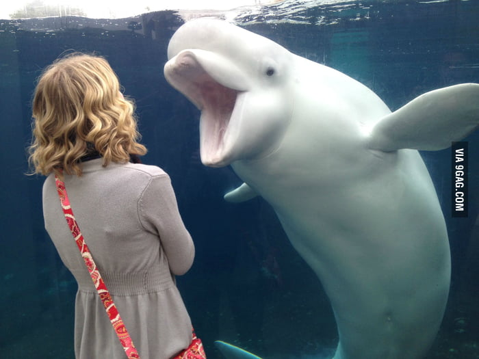 This beluga doesn't like the girl.