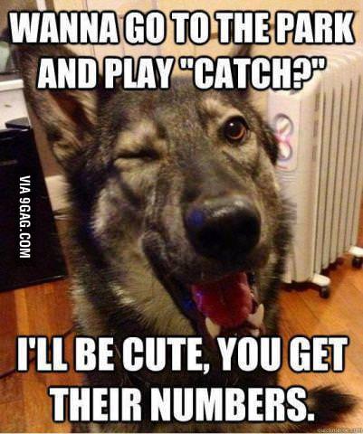 Pickup Line Dog