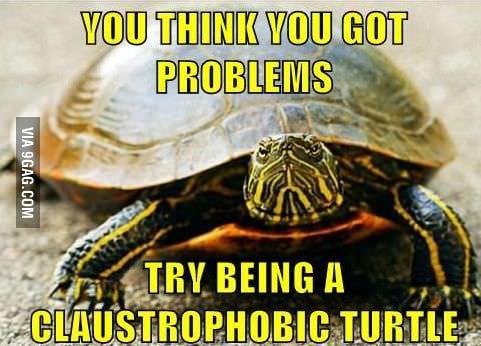 Phobias and turtles