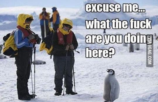 Excuse me guys…