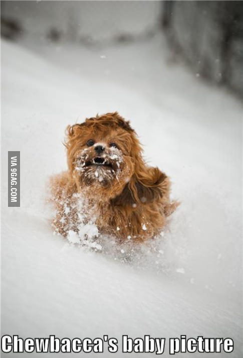 Chewbacca in his early years